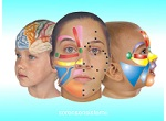 Health practitioners and body workers, click to learn about Facial Reflexology Classes.